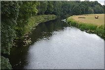 S9156 : River Slaney by N Chadwick
