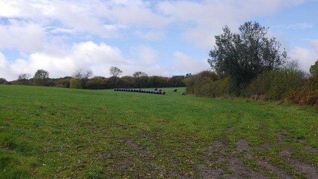 Round bales, Green Lane