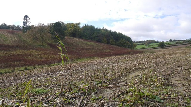 Fodder maize stubble and Stocking Wood