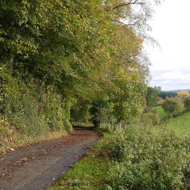 Under Beech Wood