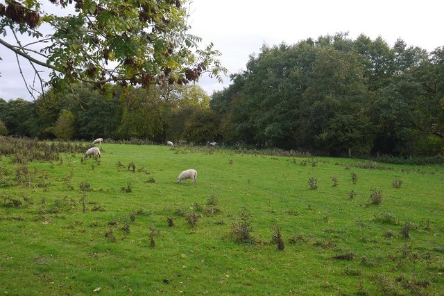 Field by Titley Pool