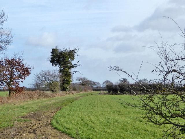 Farmland east of Slough Lane
