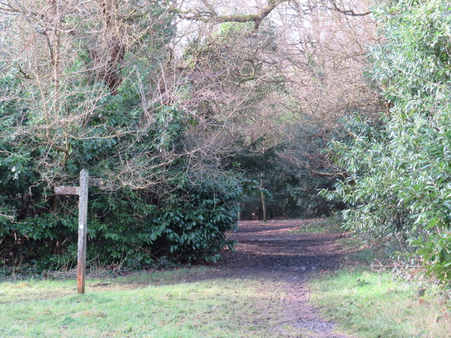 Bridleway into the woods, Tadworth
