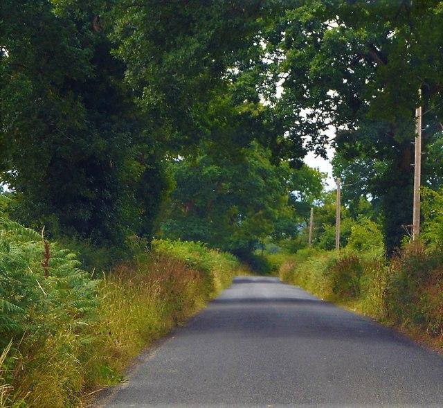 Rural road in County Carlow
