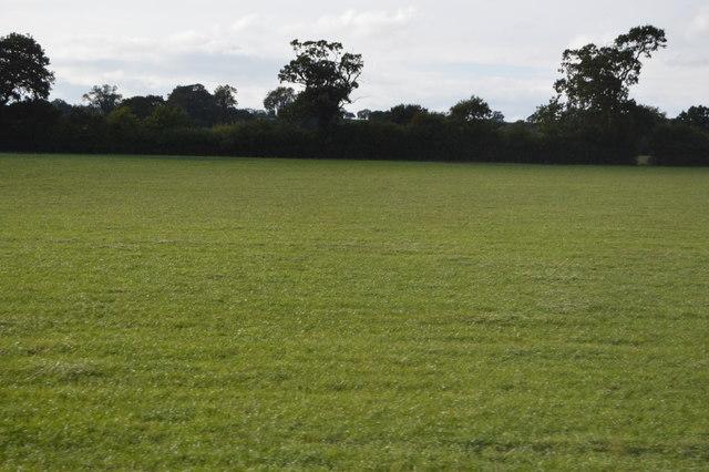 Somerset pastureland