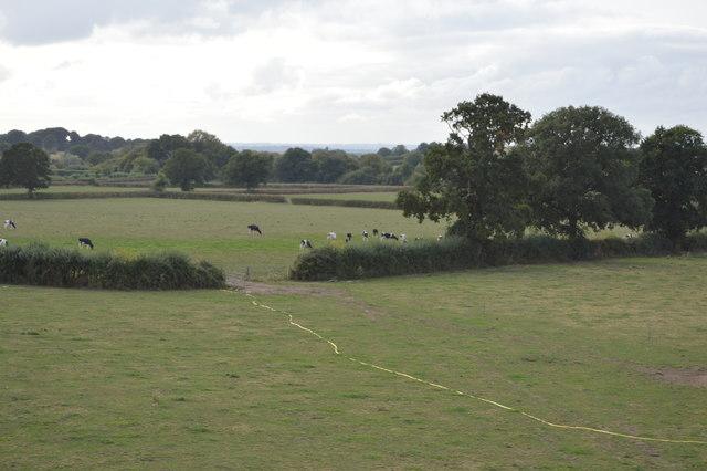 Gap in hedge