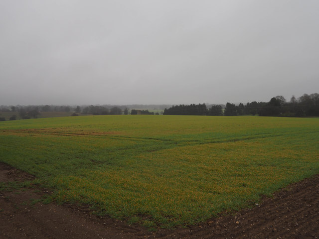 Winter cereal crop