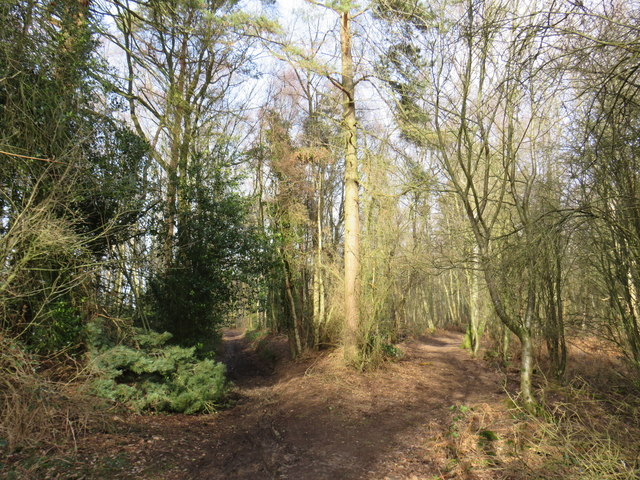 Woodland paths on Banstead Heath