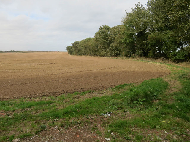 Intack Plantation, Holmpton