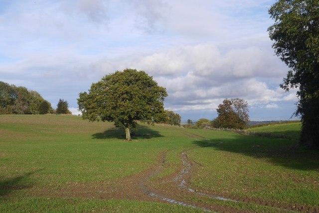 Hummocky ground, Elsdon