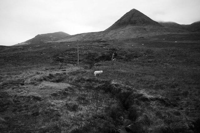 Hill grazing, Glen Brittle