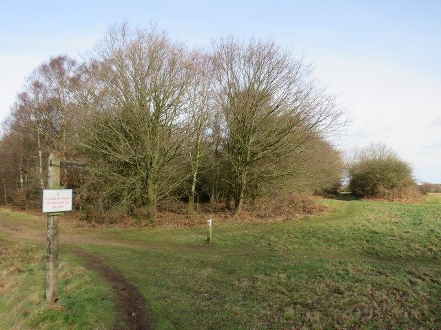 Paths on Banstead Heath