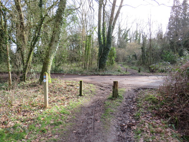 Public bridleway at Mogador, near Reigate