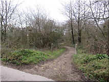 TQ2352 : Bridleway near Reigate by Malc McDonald