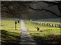 TQ5739 : Tunbridge Wells Common by Stephen McKay