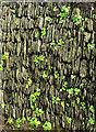 SW9175 : Wall, Padstow by Derek Harper