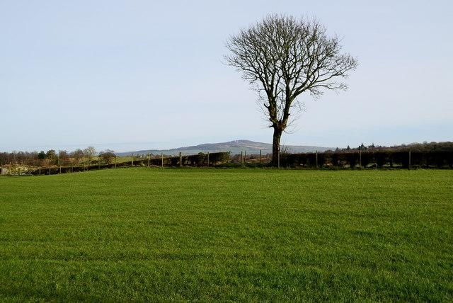 Lone tree, Carony