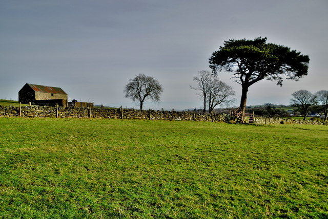 Barn and Scots pine, Carony