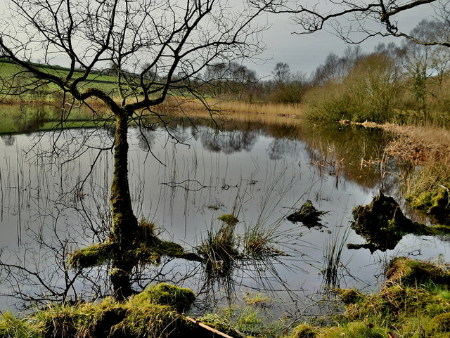 Tree in water, Claraghmore Lough