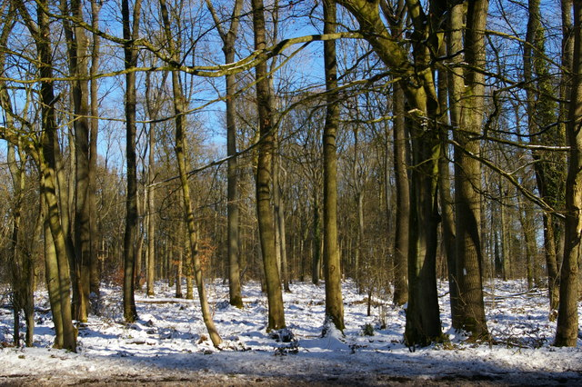 Grove Wood in snow
