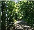 TM5182 : Suffolk Coast Path at Holly Grove by Mat Fascione