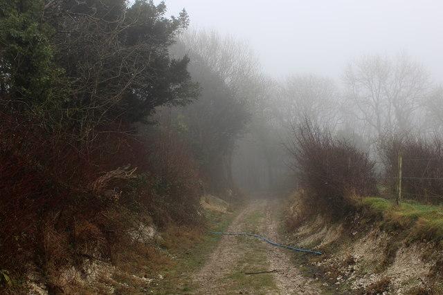 Wessex Ridgeway descending into Kithill Plantation