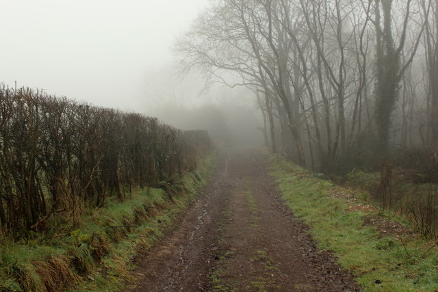 Wessex Ridgeway passing through Sheepfold Copse