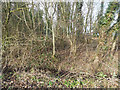 TF9104 : Area of scrub woodland by David Pashley