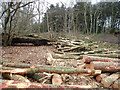 SJ0974 : Logging operations in Warren Strip by Eirian Evans