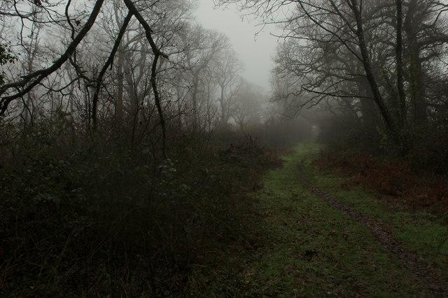 Wessex Ridgeway in Breach Wood
