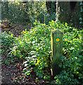 SX9065 : Waymark, Chapel Hill Pleasure Grounds by Derek Harper