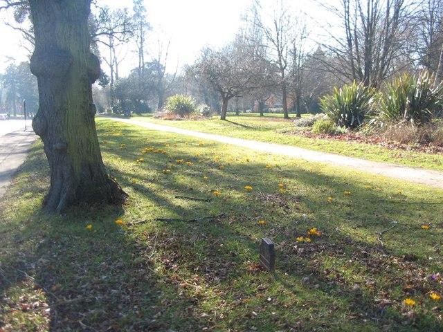 Top Green, Warwick Road