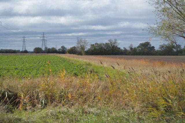 Field by Whiteway Drove