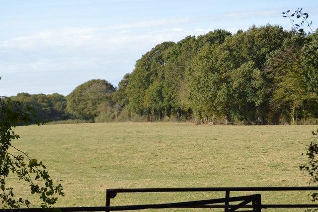 Field by Wissenden Lane