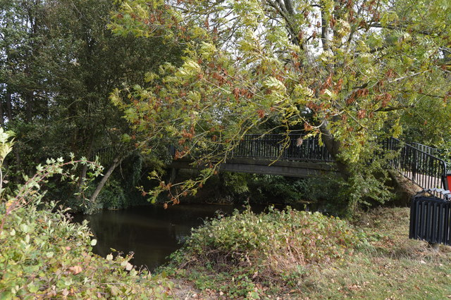 Footbridge in trees