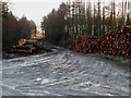 SE9995 : Logging in Cloughton Wood by Christopher Hall