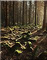 SX8783 : Woodland near Bramble Brook by Derek Harper