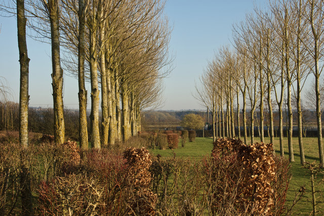 Avenue of trees, Grasby