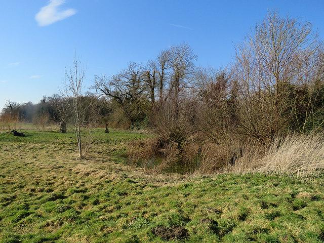 A pond on Trumpington Meadows Country Park