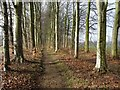SP1119 : The Gloucestershire Way passing through trees by Philip Halling