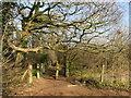 TQ2467 : Path near Morden by Malc McDonald