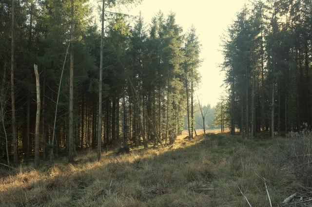 Gap between the stands, Haldon Forest