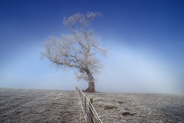 A frosted tree at Bemersyde Hill