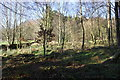 NY6923 : Inside Burthwaite Wood by Roger Templeman