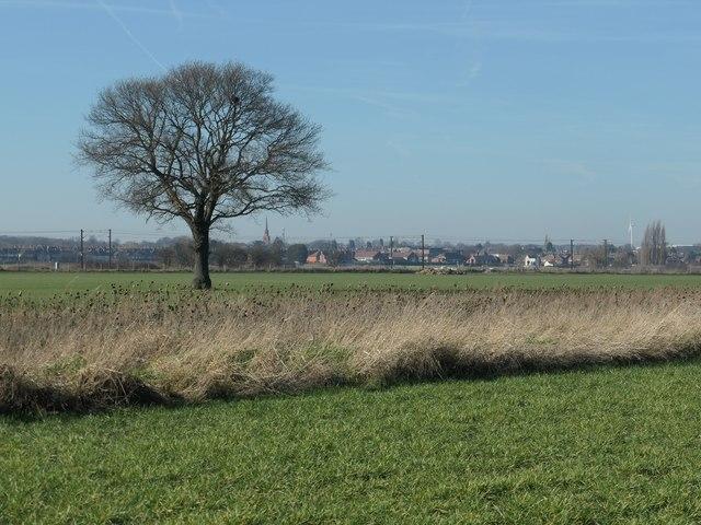 A tree in a field, Hangthwaite