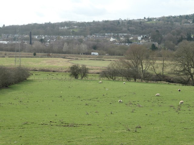 Sheep in the Aire valley, west of Elam Grange