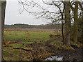 TL9393 : Looking across wetland area by David Pashley