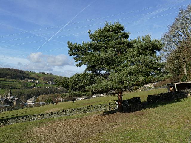 Pine tree and three alpacas