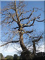 NT2475 : Sweet Chestnut by M J Richardson
