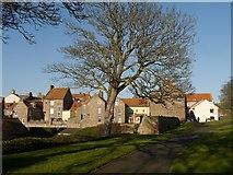 NU0052 : Houses seen from Berwick Walls by Jennifer Petrie